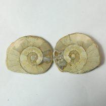 Fosszilis Ammolit Félbevágott Egész Csiga Hildoceras Harpoceras ~51-62x40-49x15-25mm Somerset, UK, Jura kor