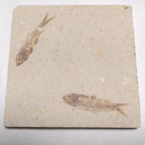 Megkövesedett Hal Lenyomat Fosszília Knightia Alta Dupla ~100x100x11mm Green River Formation, Wyoming, USA, Eocén Kor