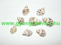 Kagyló Medál, Fülvevaló Alap (átfúrt) 28-38x18-24 mm