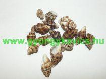Kagyló Medál, Fülvevaló Alap (átfúrt) 22-37x11-25mm