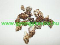Kagyló Medál, Fülvevaló Alap (fúratlan) 22-37x11-25mm