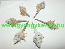Kagyló Medál, Fülvevaló Alap (átfúrt) 40-68x12-39mm