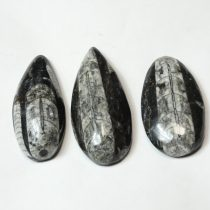 Orthoceras ~5cm Marokkó, Devon kor