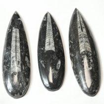 Orthoceras ~10cm Marokkó, Devon kor