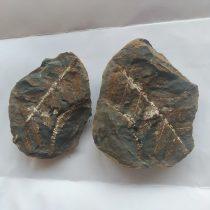 Megkövesedett Páfránylevél Lenyomat Fosszília Kőzetben ~51x41x25mm Mazon Creek, Illinois, USA, Karbon Kor