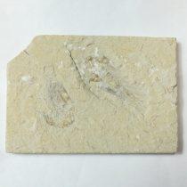 Megkövesedett Rák Lenyomat Fosszília Dupla ~107x75x10mm Libanon, Kréta Kor
